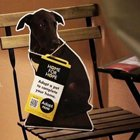 Viral Video: IKEA's New Dog Adoption Campaign