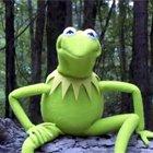 Viral Video: Kermit the Frog's Ice Bucket Challenge