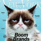 Magazine Creative: Grumpy Cat for New York Magazine