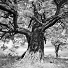 Cool Photos: Portraits of Trees