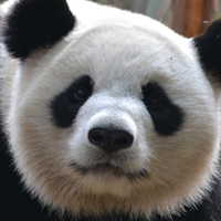 Key Takeaways from Google's Panda Algorithm Update