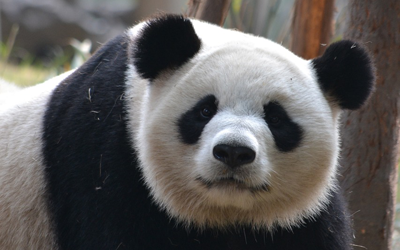 Key Takeaways from the Panda Algo