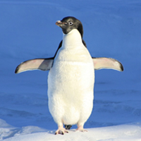Google Announces that the Real-Time Penguin Algorithm will Launch by End of Year