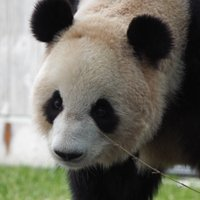Google to Roll Out Panda Update Within Next Few Weeks