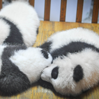 Google Confirms that Panda 4.2 was Rolled Out Over the Weekend