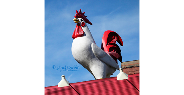 Rooftop Rooster