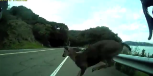 Cyclist Collides with Deer at 30 MPH