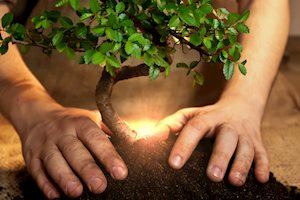 hand on ground with tree