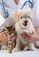 Why Is It Important to Have My Veterinarian Check a Fecal Sample?