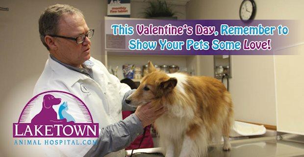 0217 Laketown Animal Hospital