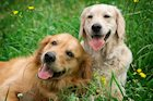 How to Socialize Your Dog and Create a More Enjoyable Pet