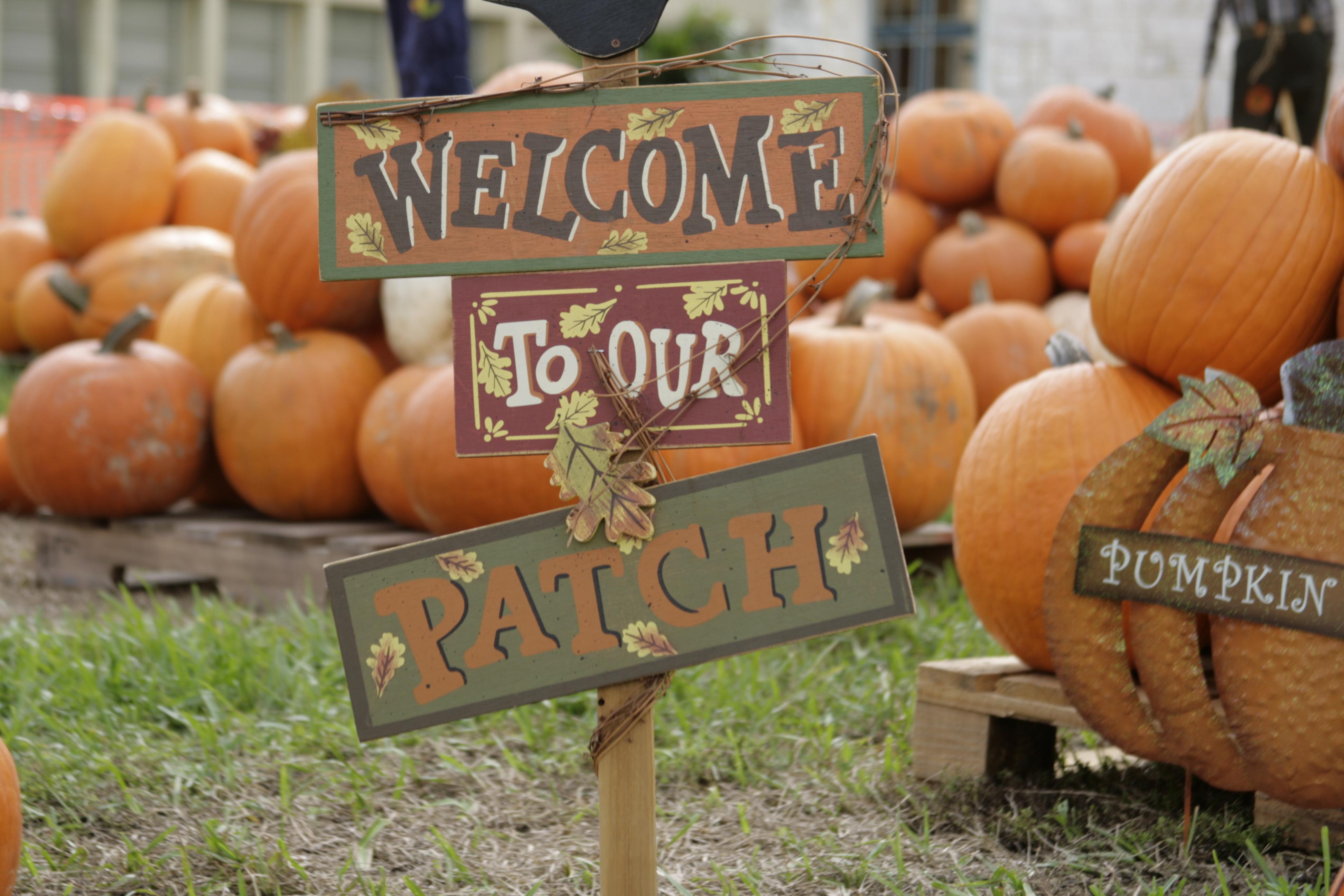 Foundation Pumpkin Patch - UMC Temple