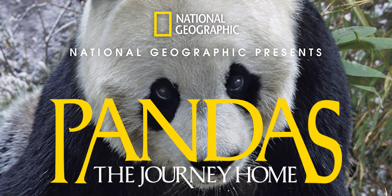 Pandas: The Journey Home - Mayborn Museum Complex
