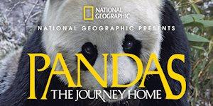 Pandas: The Journey Home - Mayborn Museum Complex