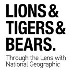 Lions, Tigers, and Bears: Through the Lens with National Geographic - Mayborn Museum