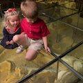 Waco Mammoth National Monument Exhibit