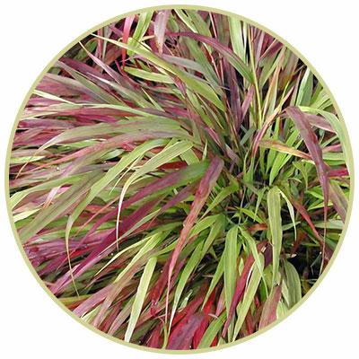 Beni-Kaze Forest Grass