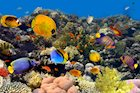 Hawaii Is the First State to Ban Sunscreen With Chemicals That Harm Marine Ecosystems