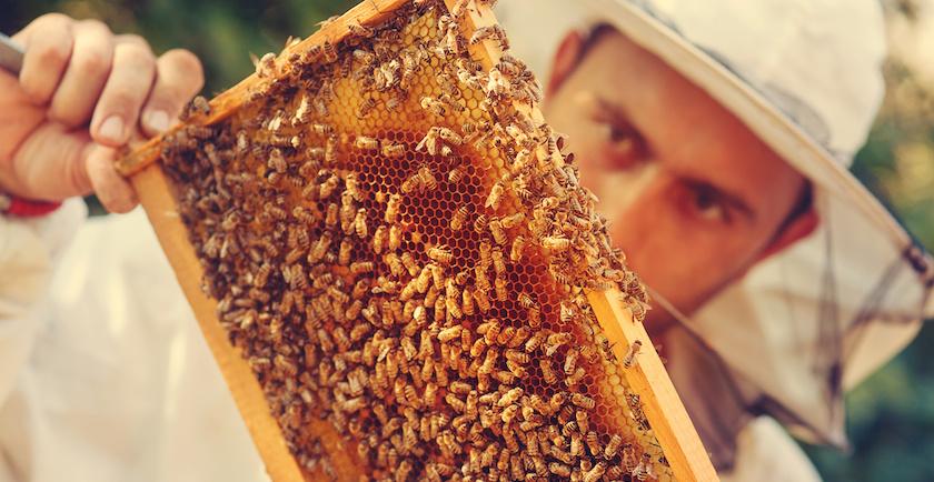 General Mills' Sweet Honeybee Commercial Stings