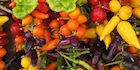 Phytochemicals in Plants: Immune-Boosting Goodness