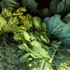 Leafy Vegetables Good For Digestion