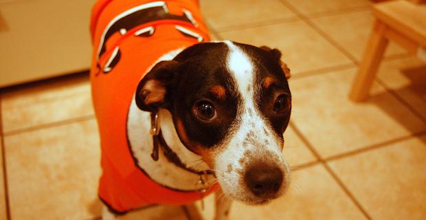 dog, costume, Halloween