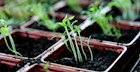Plan Your Vegetable Garden in the Winter