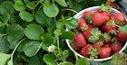 17 Ways to Eat Summer Fruits