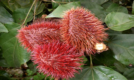 annatto, flower, health food