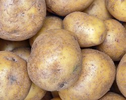 potatoes healthy or not health benefits of potatoes nutrients in potatoes