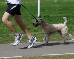 exercise with your pet new years resolutions weight loss pet care running with dogs jogging with dogs