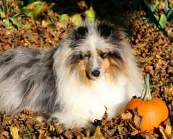 Thanksgiving for dogs pet care health family happy sharing Photo: