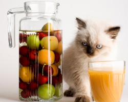 Keep your pet healthy by knowing its nutritional requirements. diet, food, pets, dogs, cats, water, protein, carbohydrates, fat, vitamins, minerals, guaranteed analysis, meat, dry matter, pet food, ingredients, natural pet care