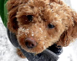 Protect your pet from toxic road and sidewalk salt during the winter months. Photo: Ktylerconk via Flickr.com. road, salt, winter, de-icer, deicer, road salt, walk, pets, dogs, natural pet care, prevention, precautionary principle, toxic, photo