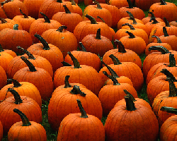 Pumpkins pack a nutritional punch. Photo: Liz West (Muffet) via Flickr.com. pumpkin, nutrition, nutritious, healthy food, skin scrub, face scrub, scrub, pumpkin seeds, mashed pumpkin, antioxidants, potassium, vitamin A, low sugar, cancer, blood sugar, fat-free, photo