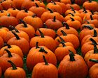 Autumn's Pumpkins Pack a Nutritional Punch