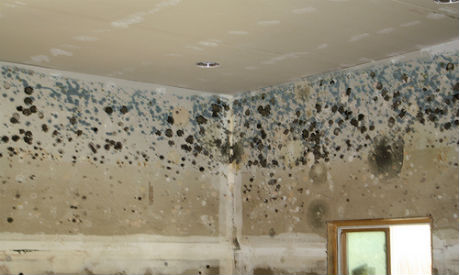 Natural disinfectants for mold after a flood