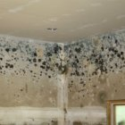 Dealing with Mold After a Flood