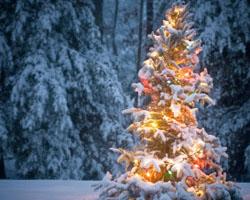 Staying Green During the Holidays: Latham Thomas: Naturally Savvy