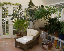 Create an indoor garden to beat the winter blues. Photo: iStock Photo. plants, indoor garden, indoor air quality, air quality, winter, fresh air, green, natural, eco-friendly, photo