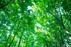 Trees play a vital role in the Earth's ecosystems. photo, trees, nature, environment, ecosystem, nature, energy, clean air, oxygen, carbon, wildlife