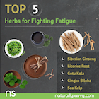[Infographic] Top 5 Herbs for Fighting Fatigue