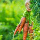5 Great Tips for Starting a Spring Organic Garden