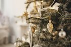 Could Your Christmas Tree Have Mold?