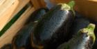 Vegan Eggplant Fricassée