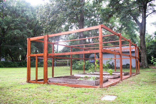 How to Build a Squirrel Proof Enclosure for Your Vegetable Garden