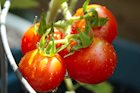 Can Tomatoes Protect You from Skin Cancer?