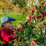 Apples Apples Everywhere!