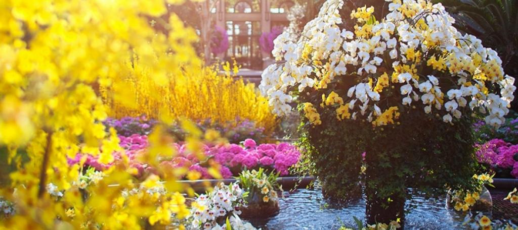 Orchid Extravaganza at Longwood Garden