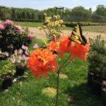 Annual Plant Sale Fundraiser